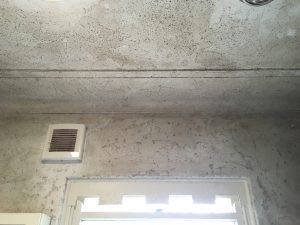 Mould Remediation Sydney - Before 3
