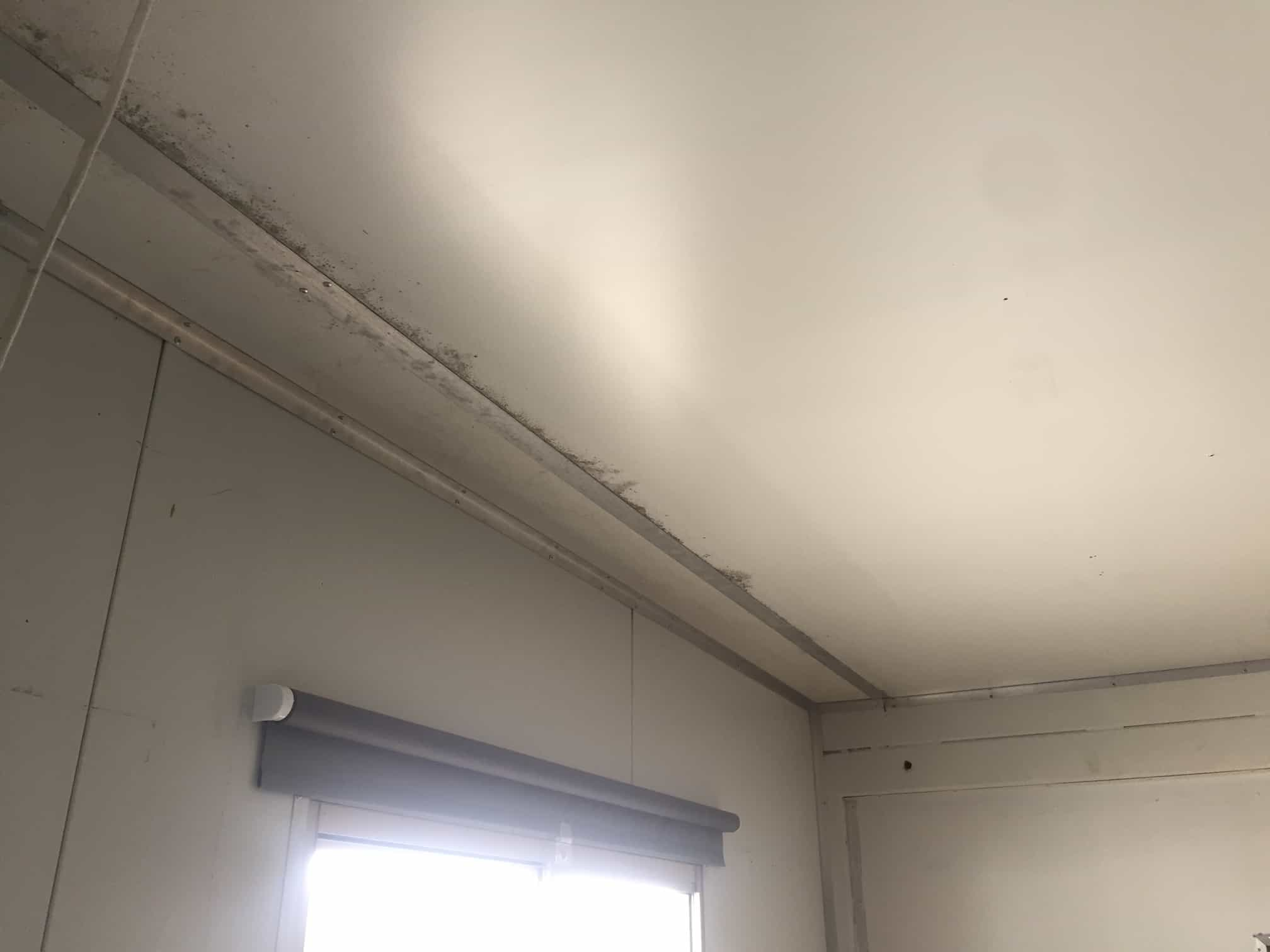 mould growth ceiling corners