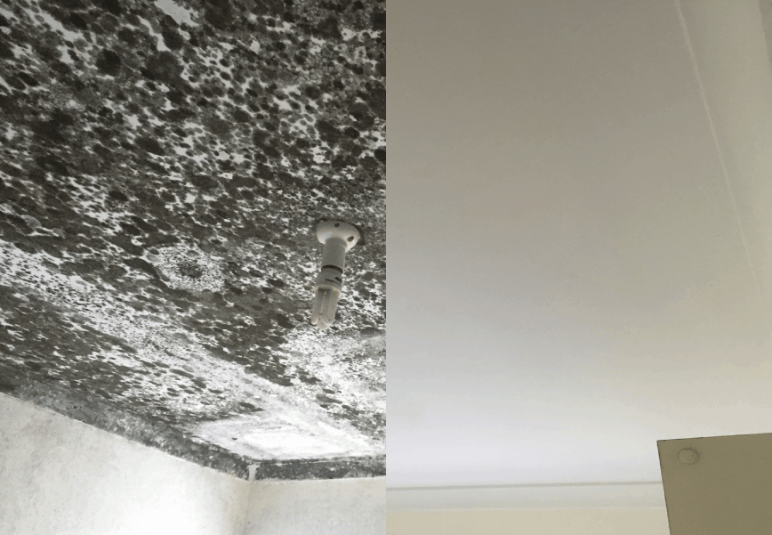 How To Clean Black Mould