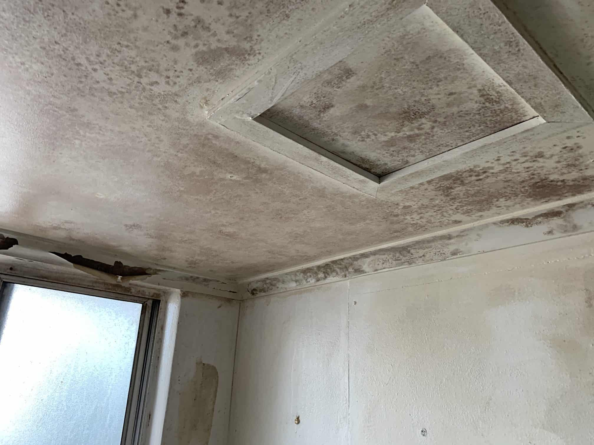 Mould Remediation Sydney - Before 1