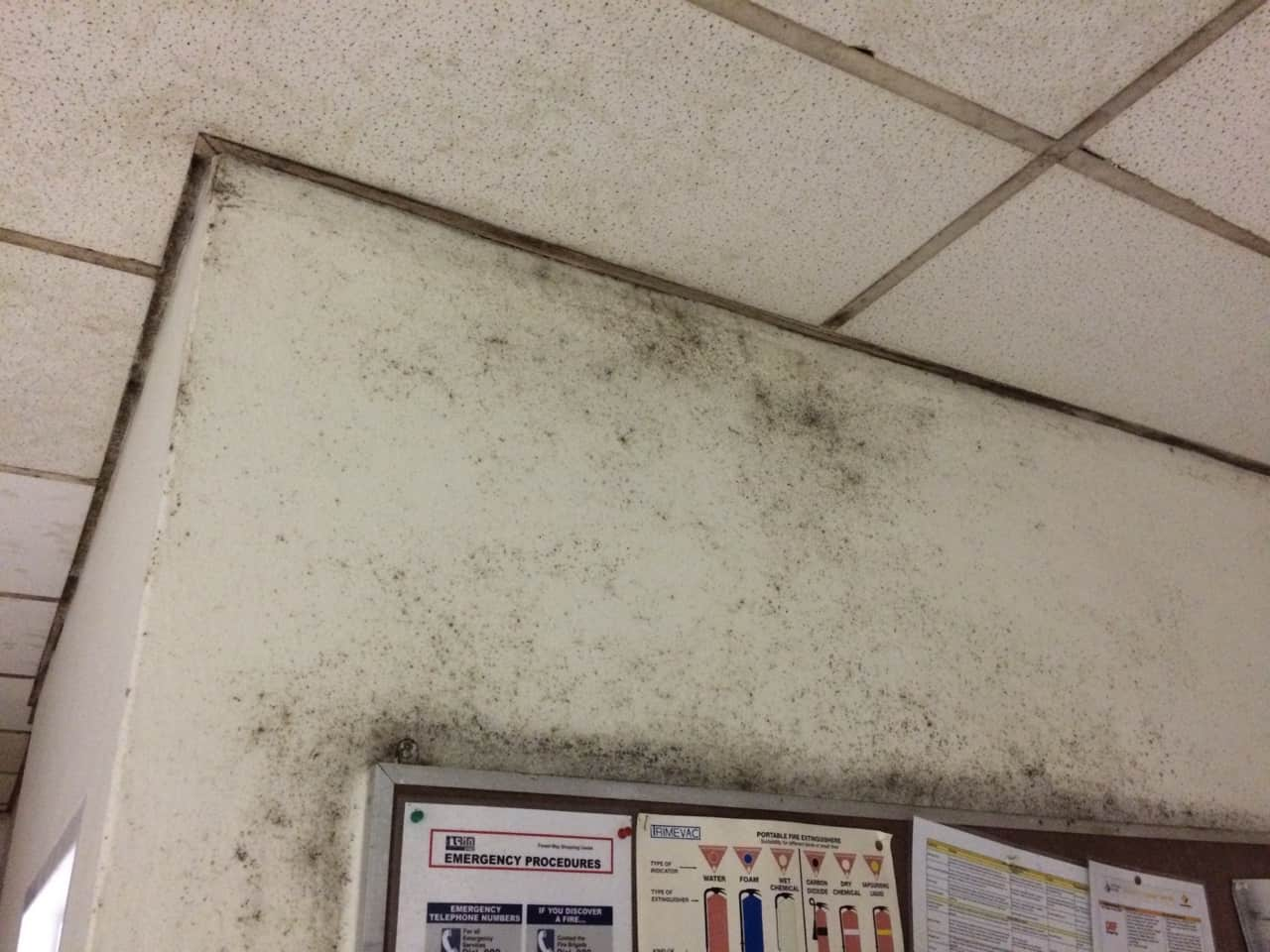 aggressive mould growth on walls