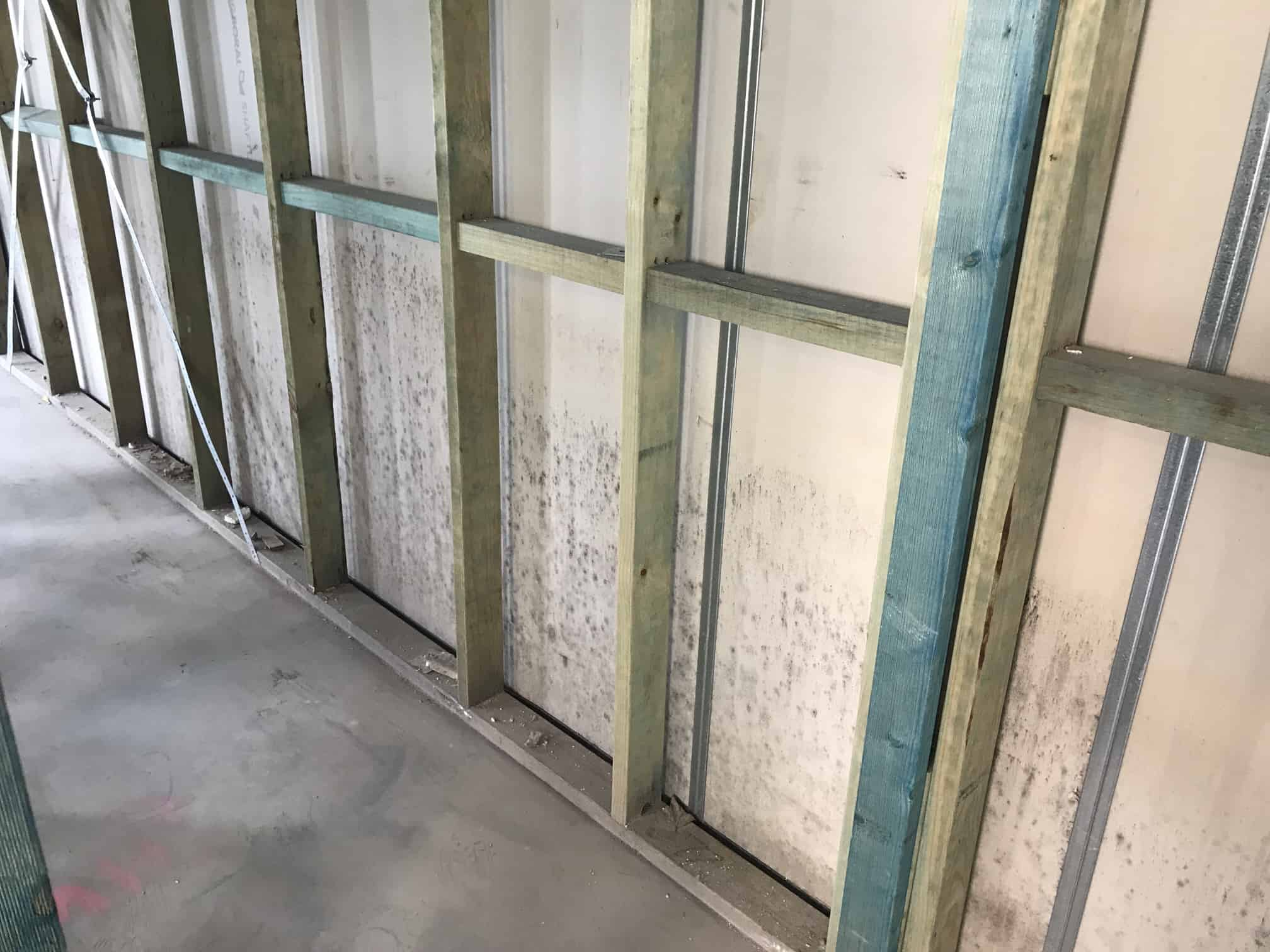mould on drywall