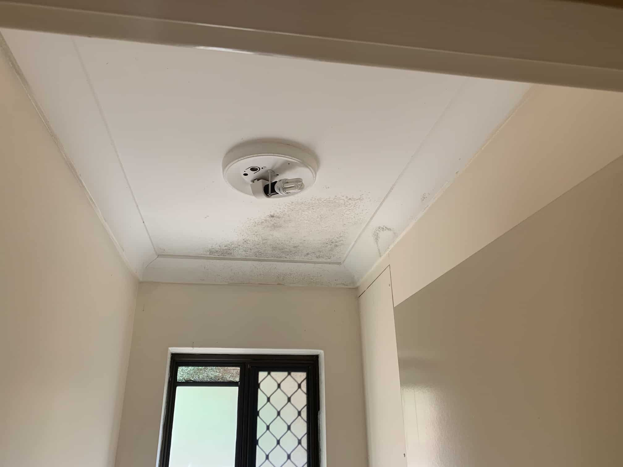 mould growing on ceiling