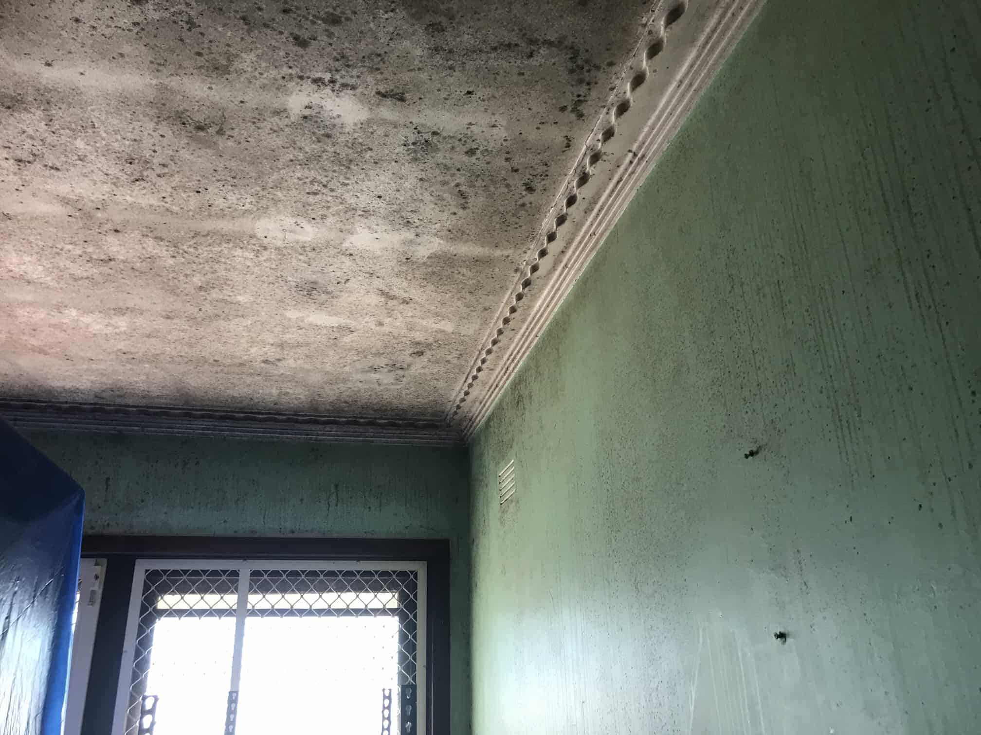 mould infested room with green walls