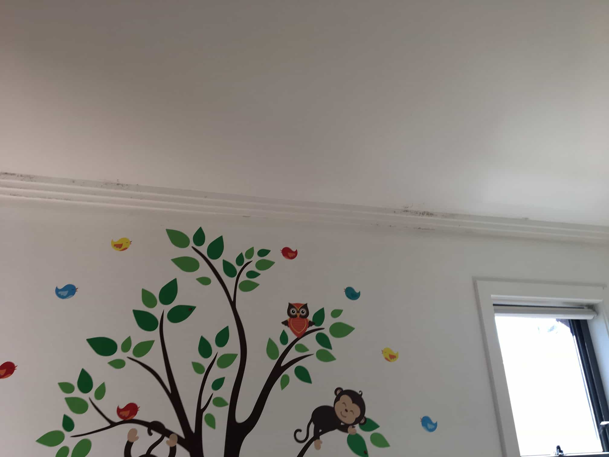 mould growing in childrens room