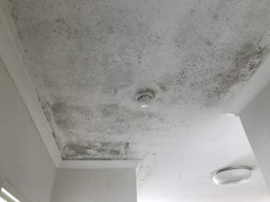 mould Newcastle ceiling