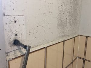 hills shire mould removal