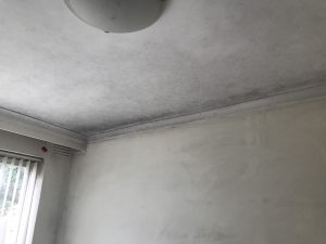 removing mould in inpswich