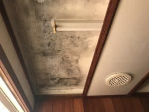 mould in bathroom sutherland shire