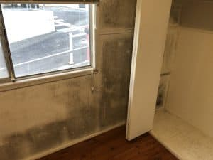 mould removal wall eastern suburbs