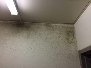 inner west mould remediation