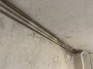 mould removal north shore walls and ceiling