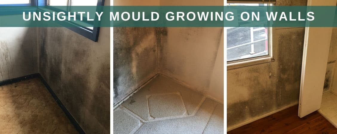 unsightly mould growing on walls