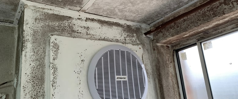 black mould on ceiling and wall